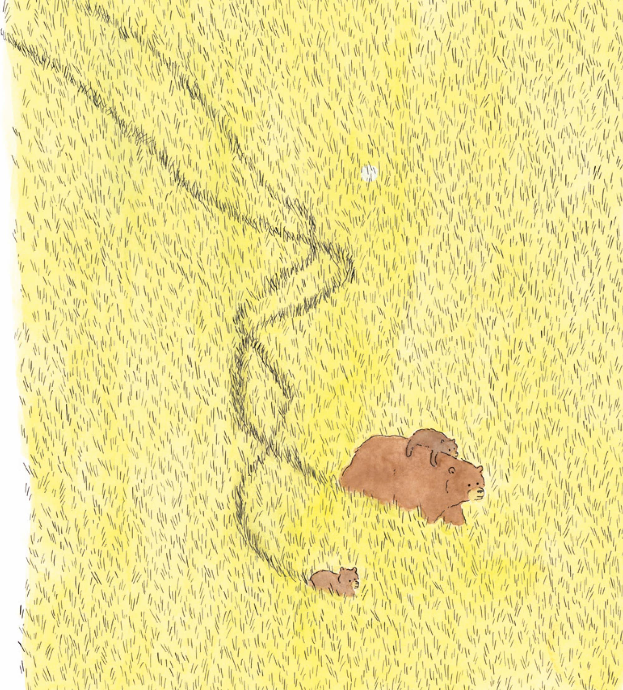 Osos, de Pascal Girard